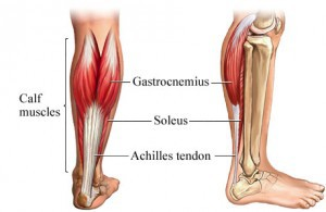 Soleus-muscle-aka-the-second-heart