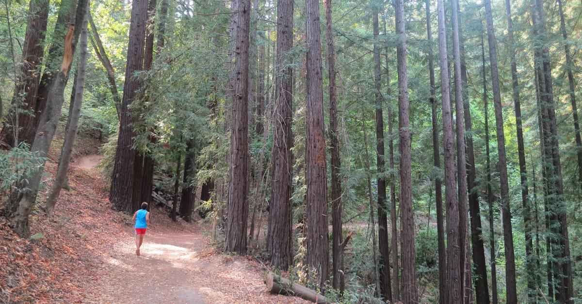 Kim på løpetur i skogen